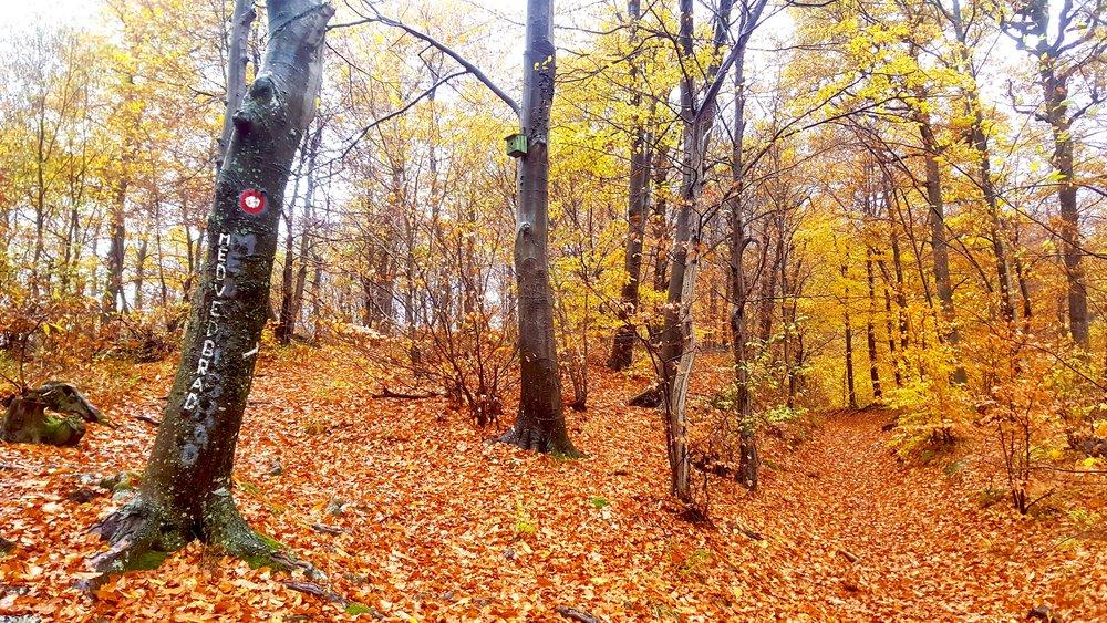 forest-medvedgrad-sign.jpg