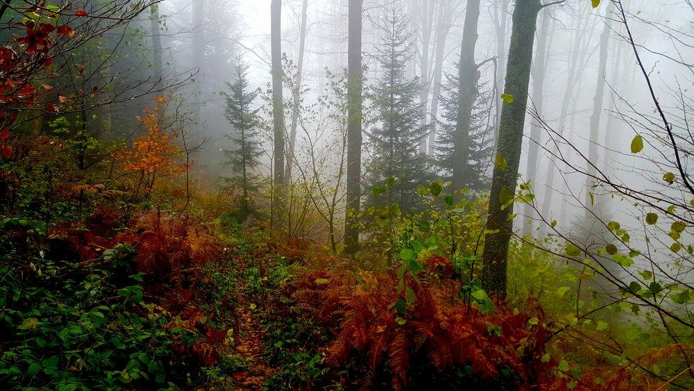 forest-fog-1.jpg