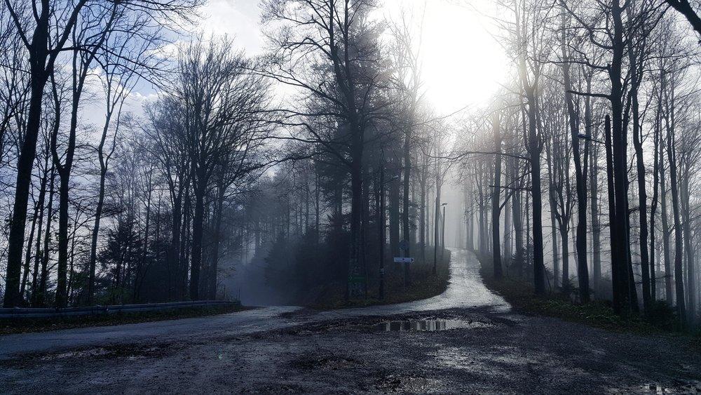 forest-fog-fork.jpg