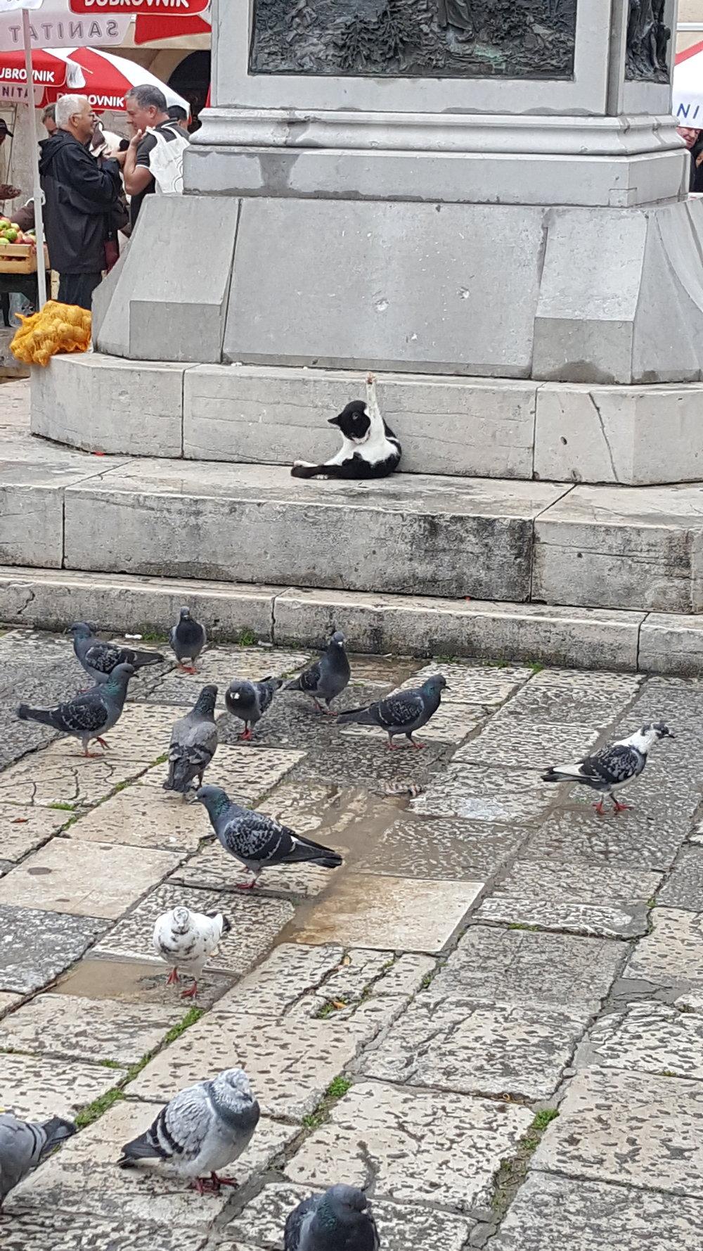 dbk-cat-pigeons.jpg
