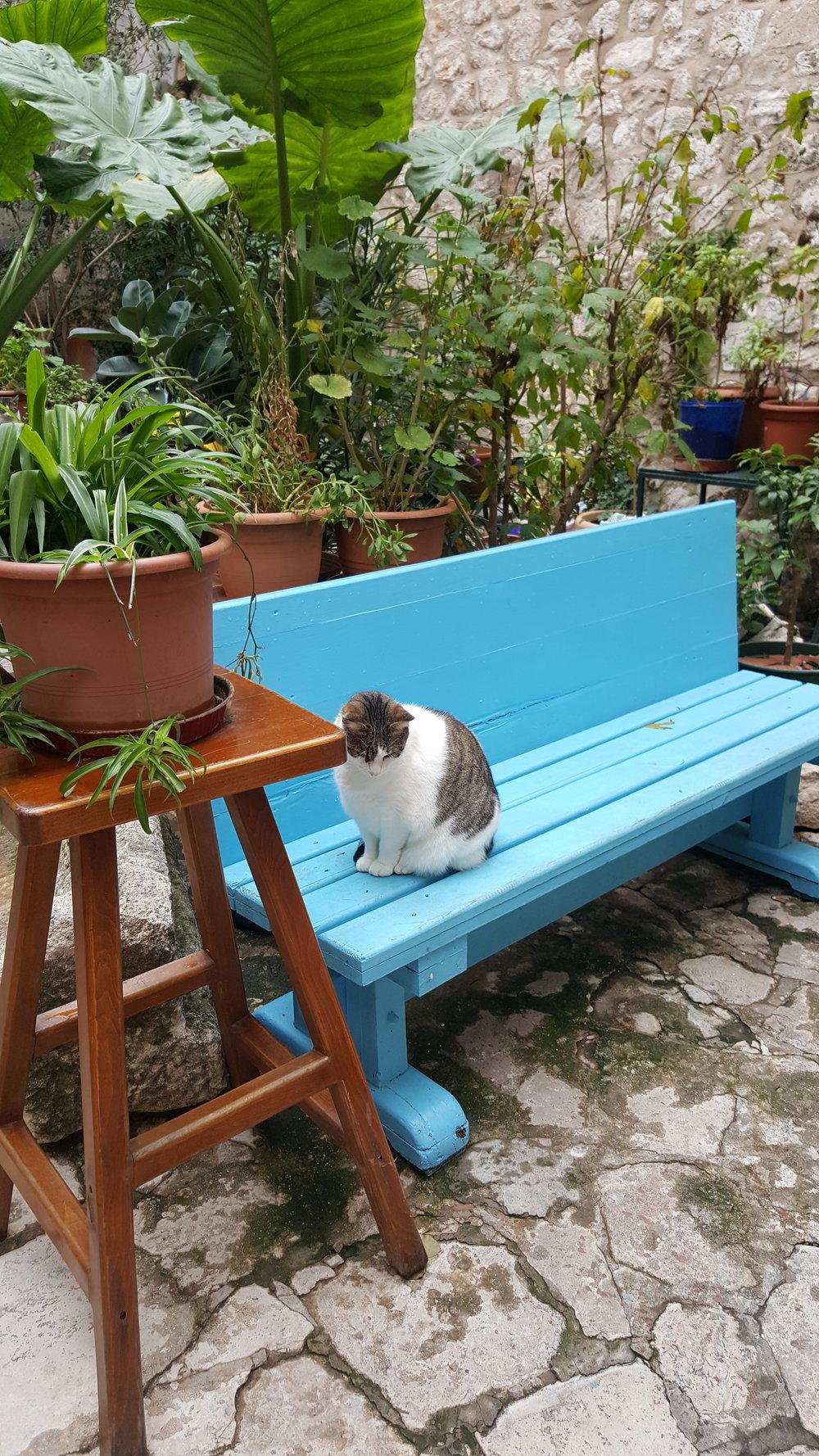 dbk-cat3.jpg