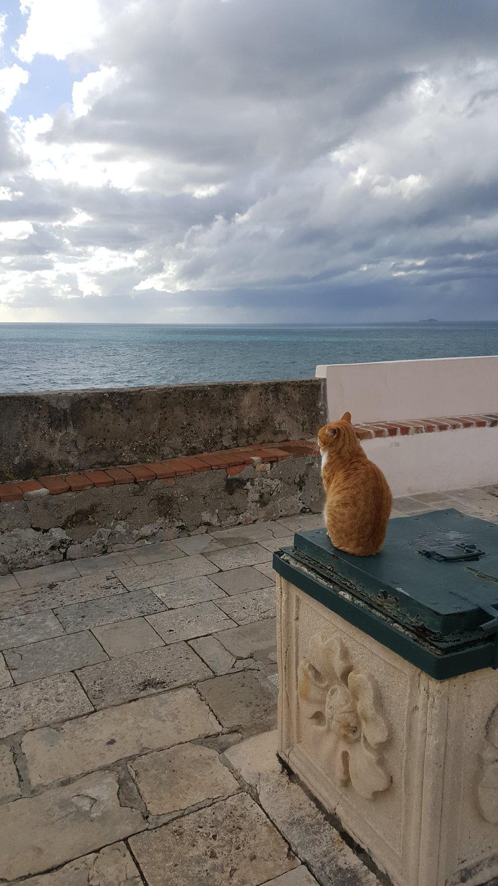 dbk-cat4.jpg