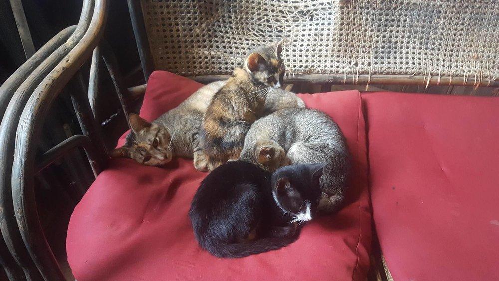 banlung-balcony-kittens.ong