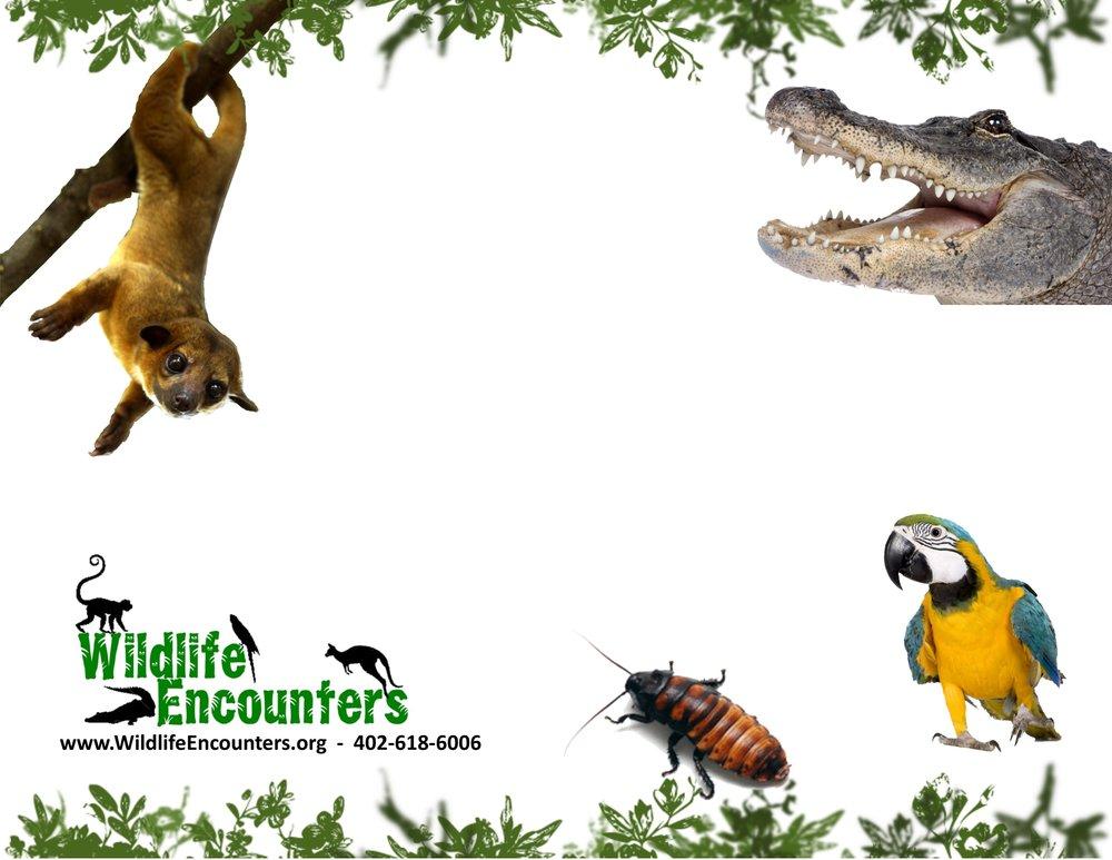wildlife-encounters-birthday-party-invites-2