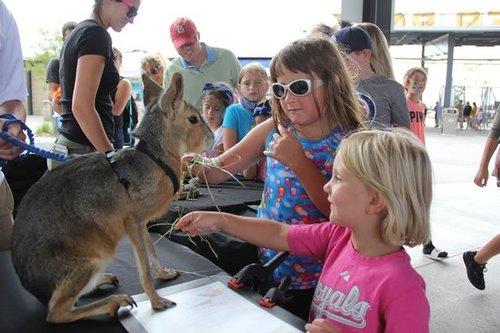 Omaha Petting Zoo.jpg