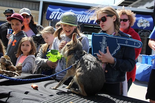 INTERACTIVE EDUCATIONAL EVENTS - Give you visitors a chance to interact with some amazing animals up close! They can have the opportunity to pet a tortoise, feed on of the largest rodents in the world, touch a snake and ask our animal experts wildlife questions.