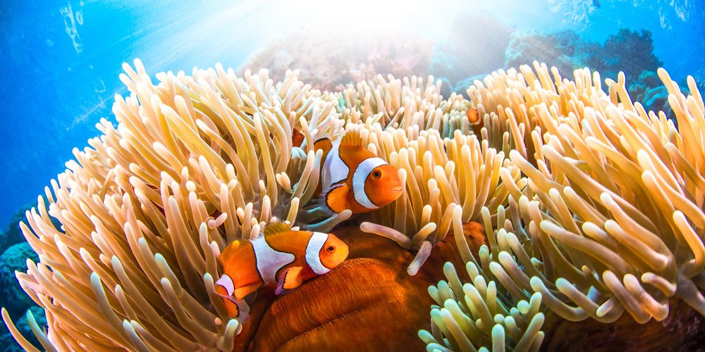Great Barrier Reef — December Media