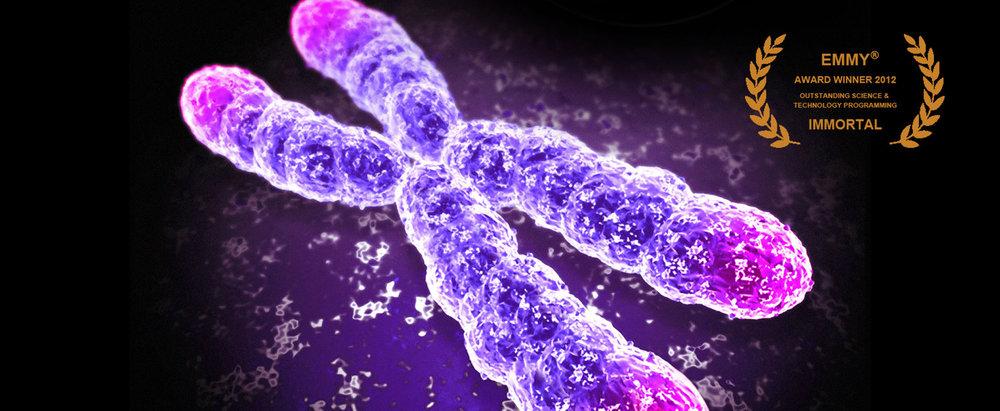 Immortal+Emmy+Chromosome+Slide.jpg