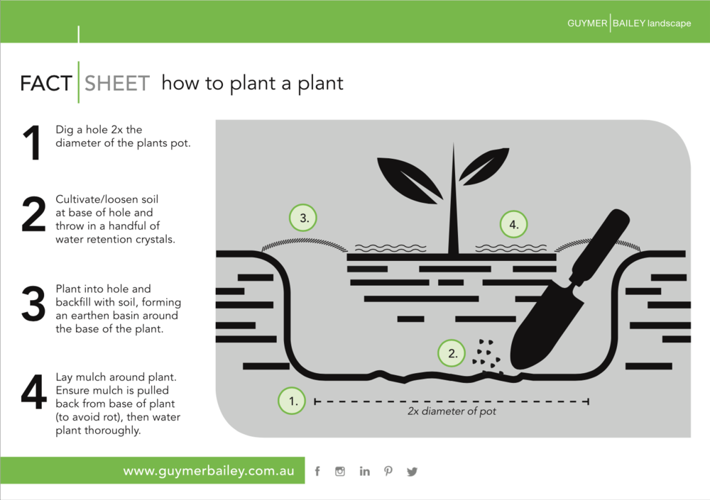 Guymer Bailey - How to plant a plant
