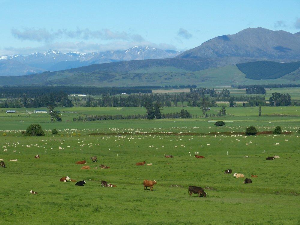 farmland nz.jpg