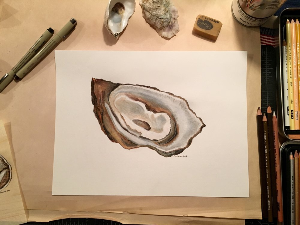 Oyster Study Complete