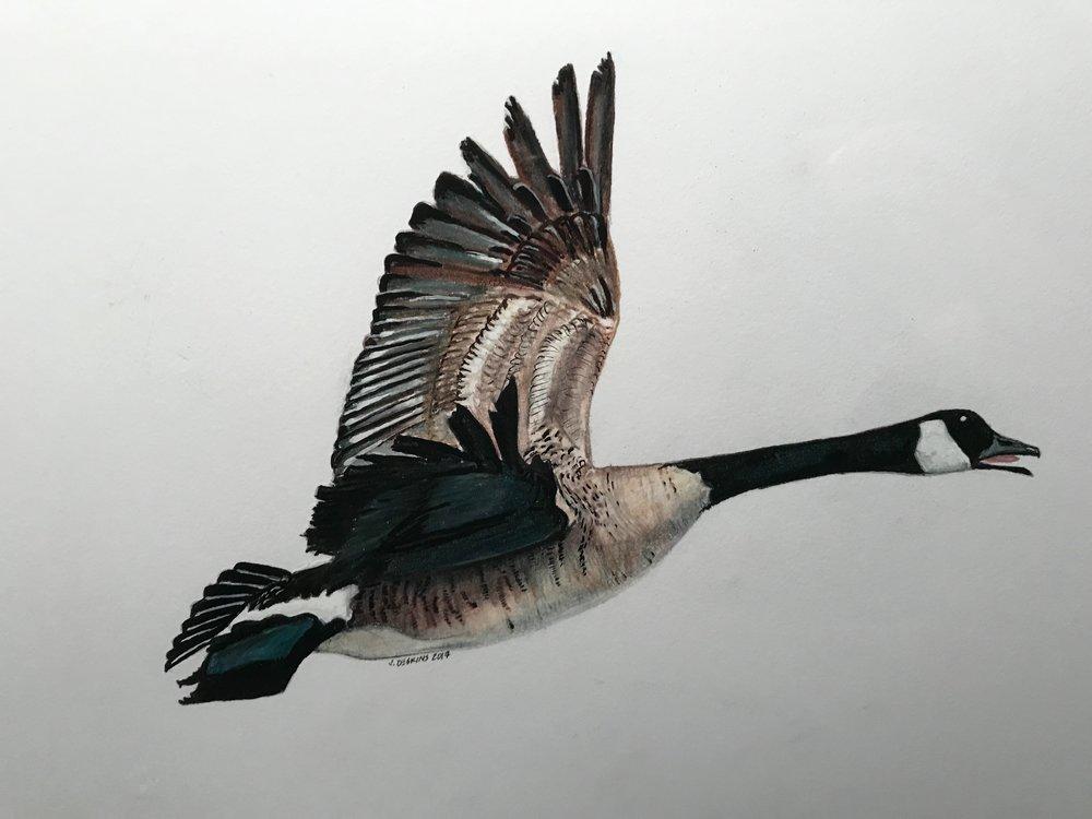 Canada goose in progress