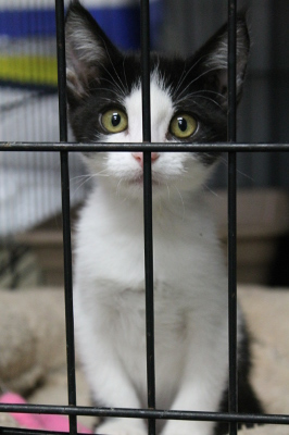 "Tuxie says ""Will YOU take me home?"""