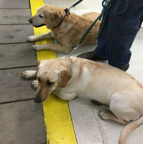 Two good dogs and their person await their turn at the Country Store