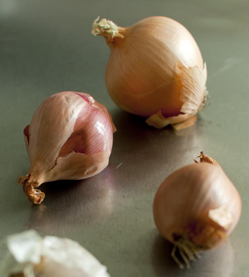 Zucchini431.jpg
