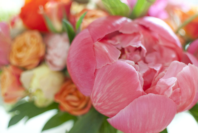 bloomboom24.jpg