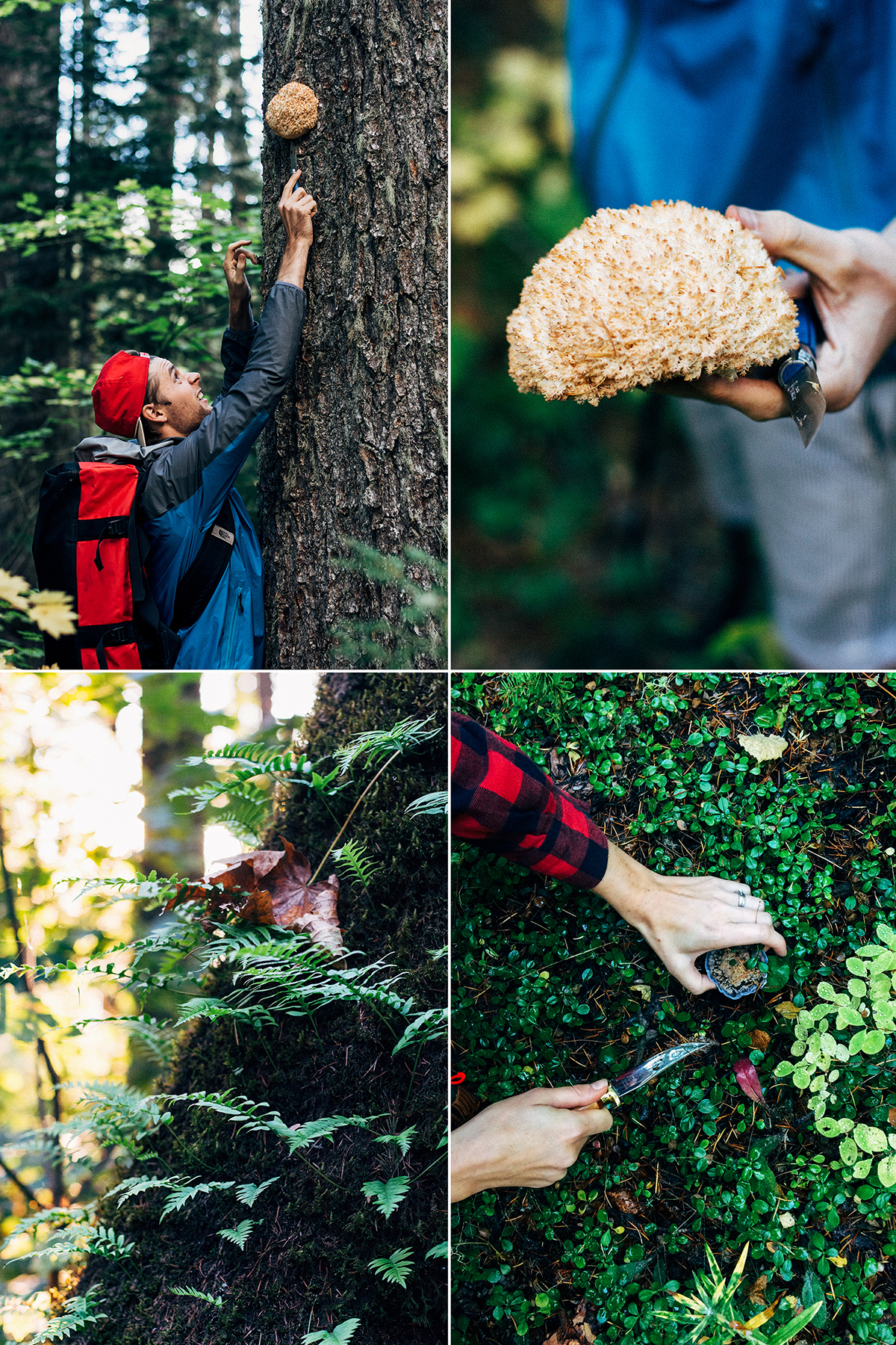 mushroom foraging with wild craft studio