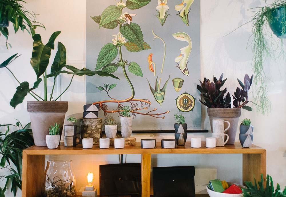 encouraging spring wellness with house plants » itsmecharlotte.com