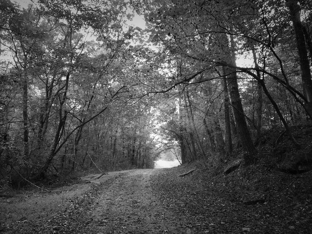 treed_lane.jpg