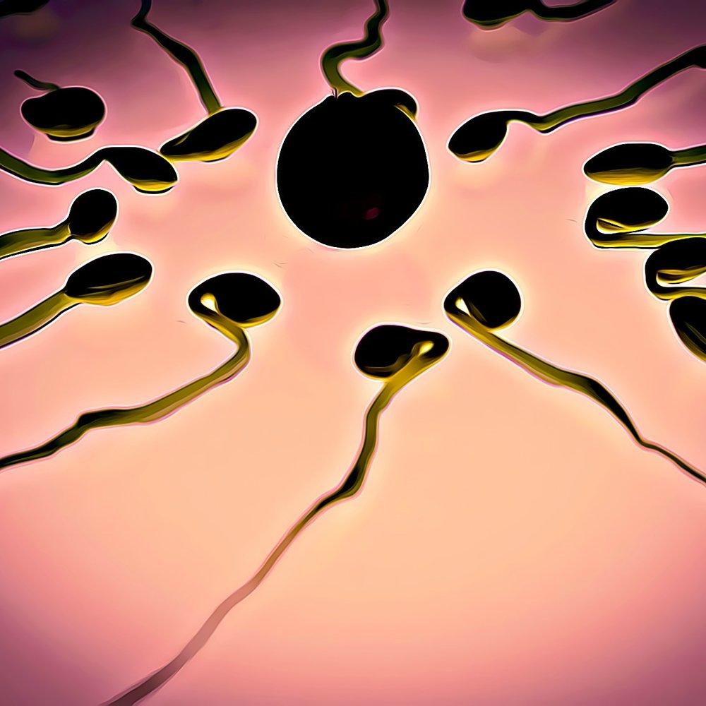sperm-956482_1920.jpg