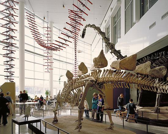 science-museum-mn-dinosaurs.jpg