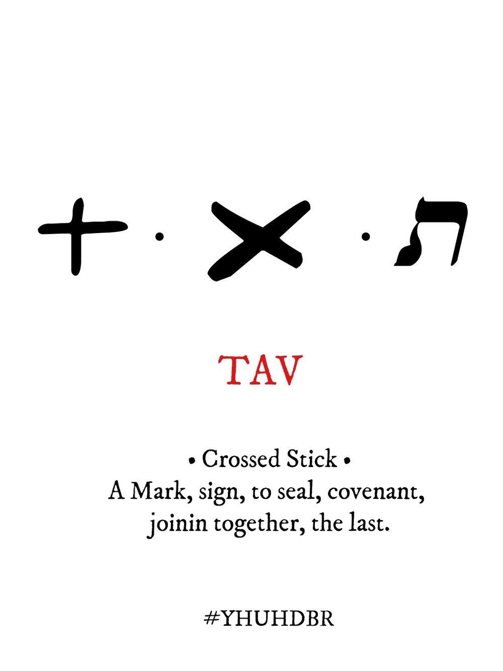 TAV.jpg