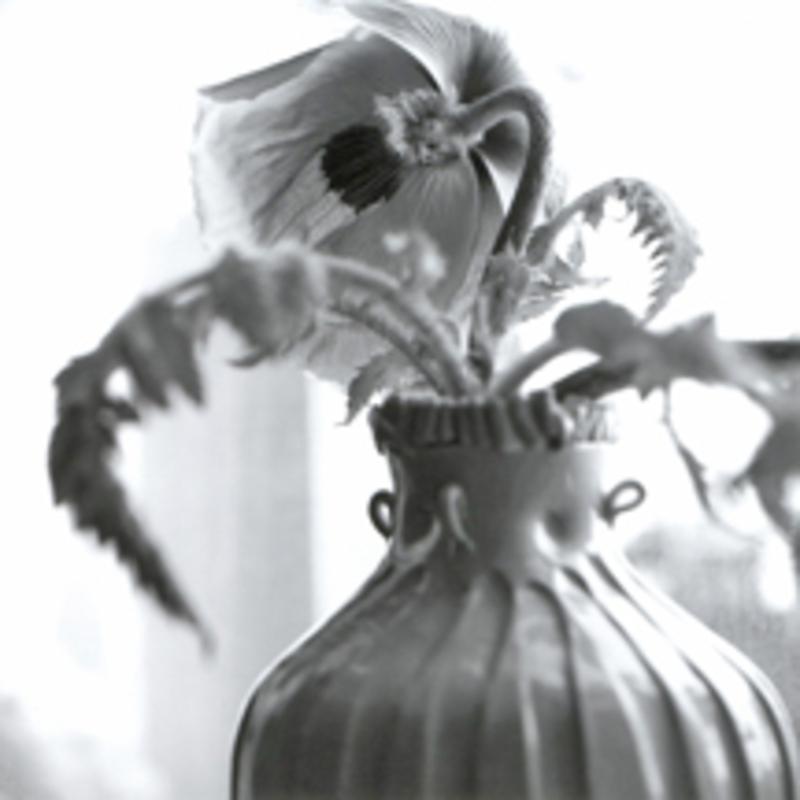 Poppyblog
