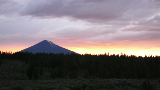 Blackbutte