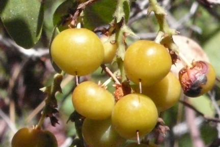 Manzberry