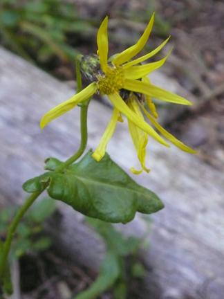 Wildflower3