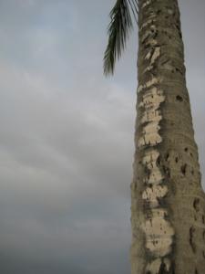 Palmblog