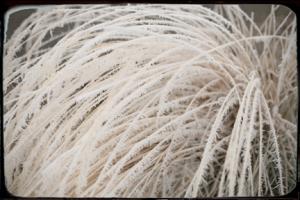 Grassfrostblog