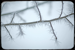 Frostblog