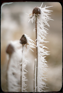 Frostflowerblog