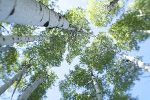 Trees.blog