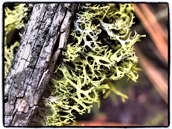 Moss2.blog