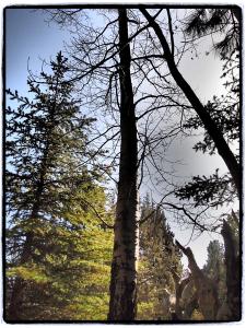 Aspen.blog