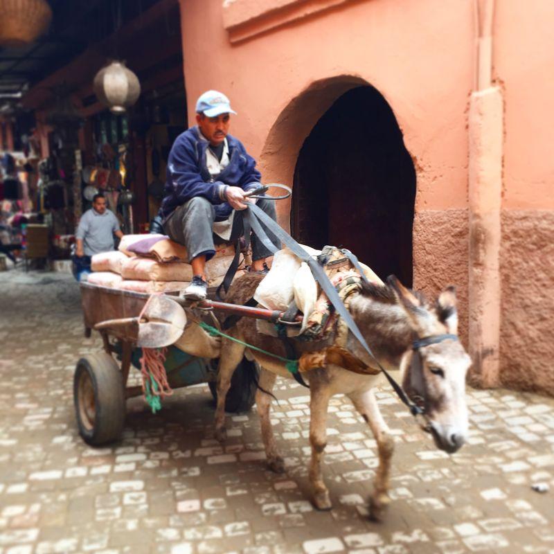 Donkeyandcart