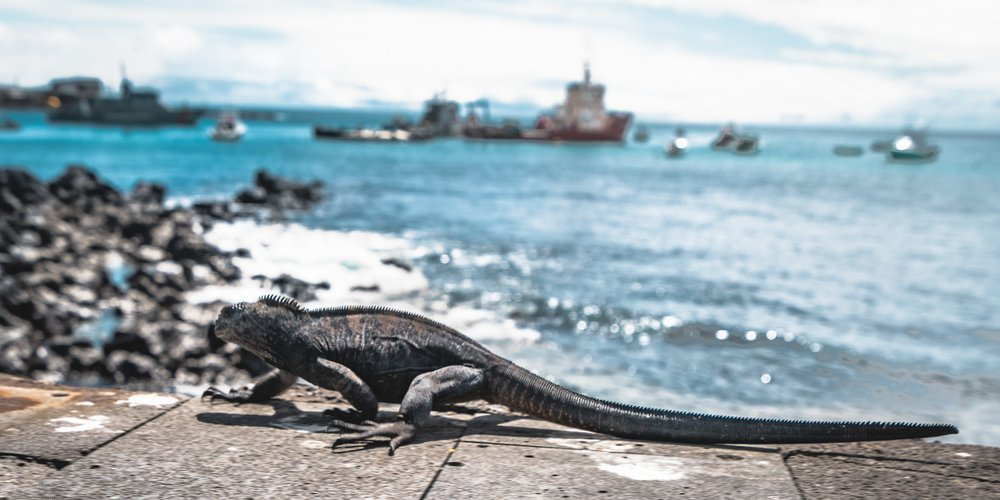Galapagos Islands Sustainably discover plant and wildlife found nowhere else on this planet! Learn More
