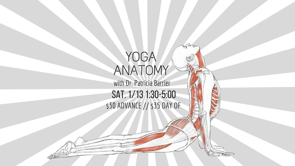 Are you a yoga student who wants to know more about how your body WORKS while you are in your practice? Are there specific poses that you struggle with physically, or are confused about how to embody in the most beneficial way?   This Anatomy workshop is part of a series that is being offered by retired physician and yoga teacher Dr. Patricia Barrier. She will be covering all the basics to help you get a better understanding of how your body works within your yoga asanas, and to gain a deeper connection to your practice, and any issues you may be facing in specific yoga poses.   This workshop is being offered in conjunction with our yoga teacher training program, so space is limited. You will be learning the same valuable information as yoga teachers in our training program!   SATURDAY 1/12 // 1:30-5:00 //$30 ADVANCE // $35 DAY OF // Led by Dr. Patricia Barrier
