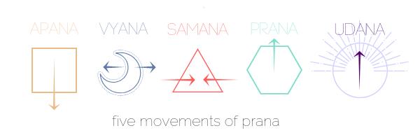 IMAGE OF PRANA VAYUS.png
