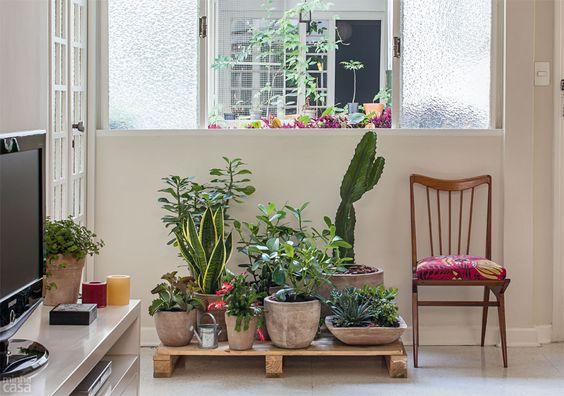 Composição de vasos com plantas resistentes e de pouca manutenção!   [fonte da imagem]