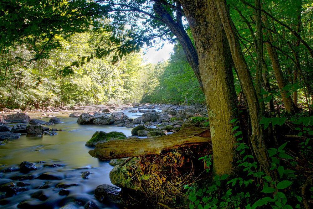 rockstrewn stream sunlit water trees silky