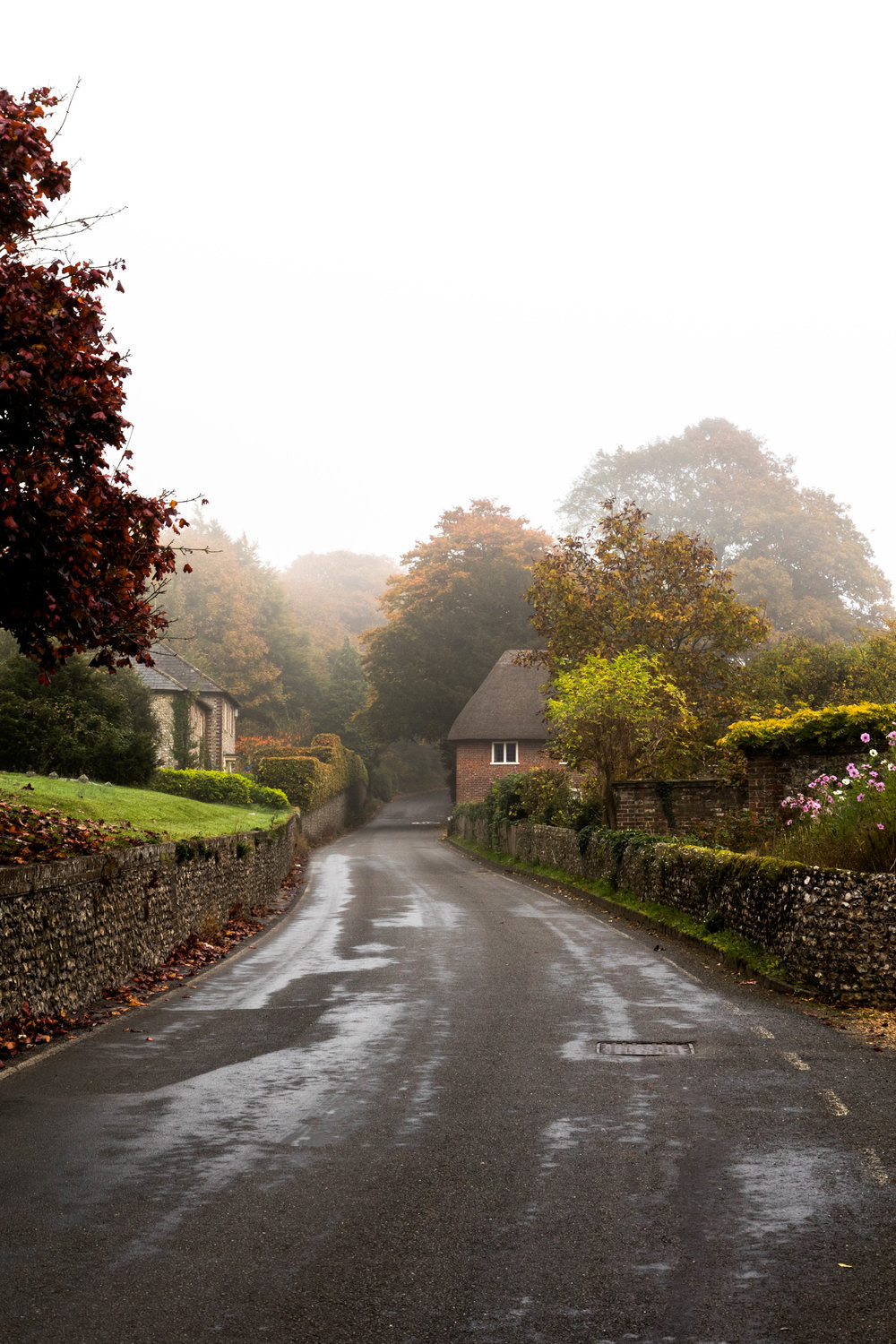 Misty, milky, foggy country lanes ....