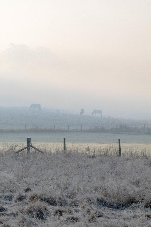 Misty Winter Mornings - Shannon Hammond Photography-2.jpg