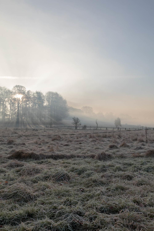 Misty Winter Mornings - Shannon Hammond Photography-4.jpg