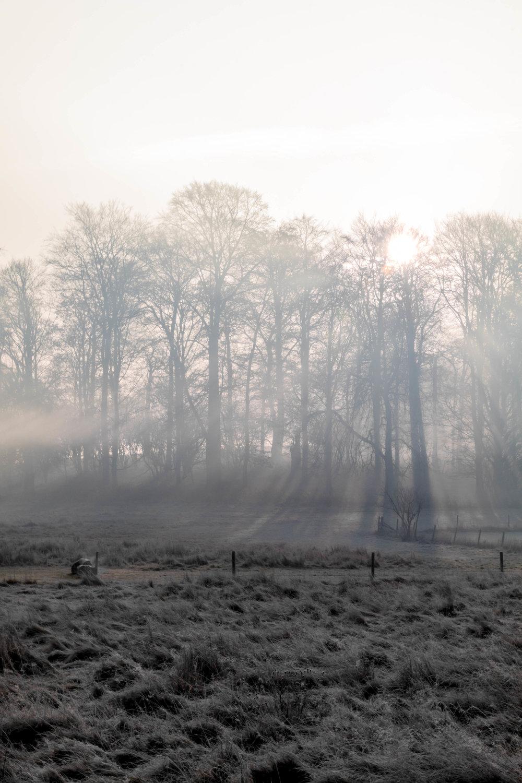 Misty Winter Mornings - Shannon Hammond Photography-7.jpg