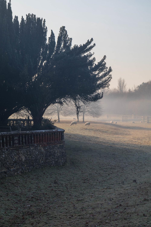 Misty Winter Mornings - Shannon Hammond Photography-13.jpg