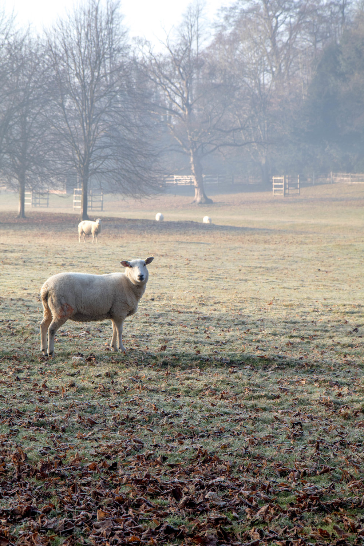 Misty Winter Mornings - Shannon Hammond Photography-15.jpg