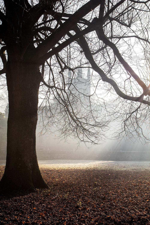 Misty Winter Mornings - Shannon Hammond Photography-19.jpg